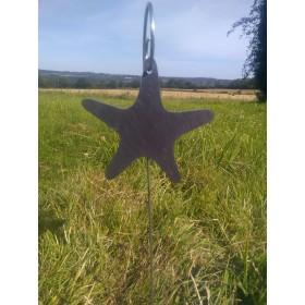 étoile de mer 8x8cm